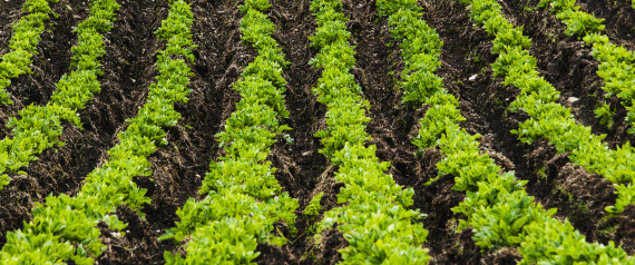 WE HAVE ENOUGH LAND TO FEED OUR GROWING POPULATION, WE JUST HAVE TO USE IT RIGHT, STUDY FINDS